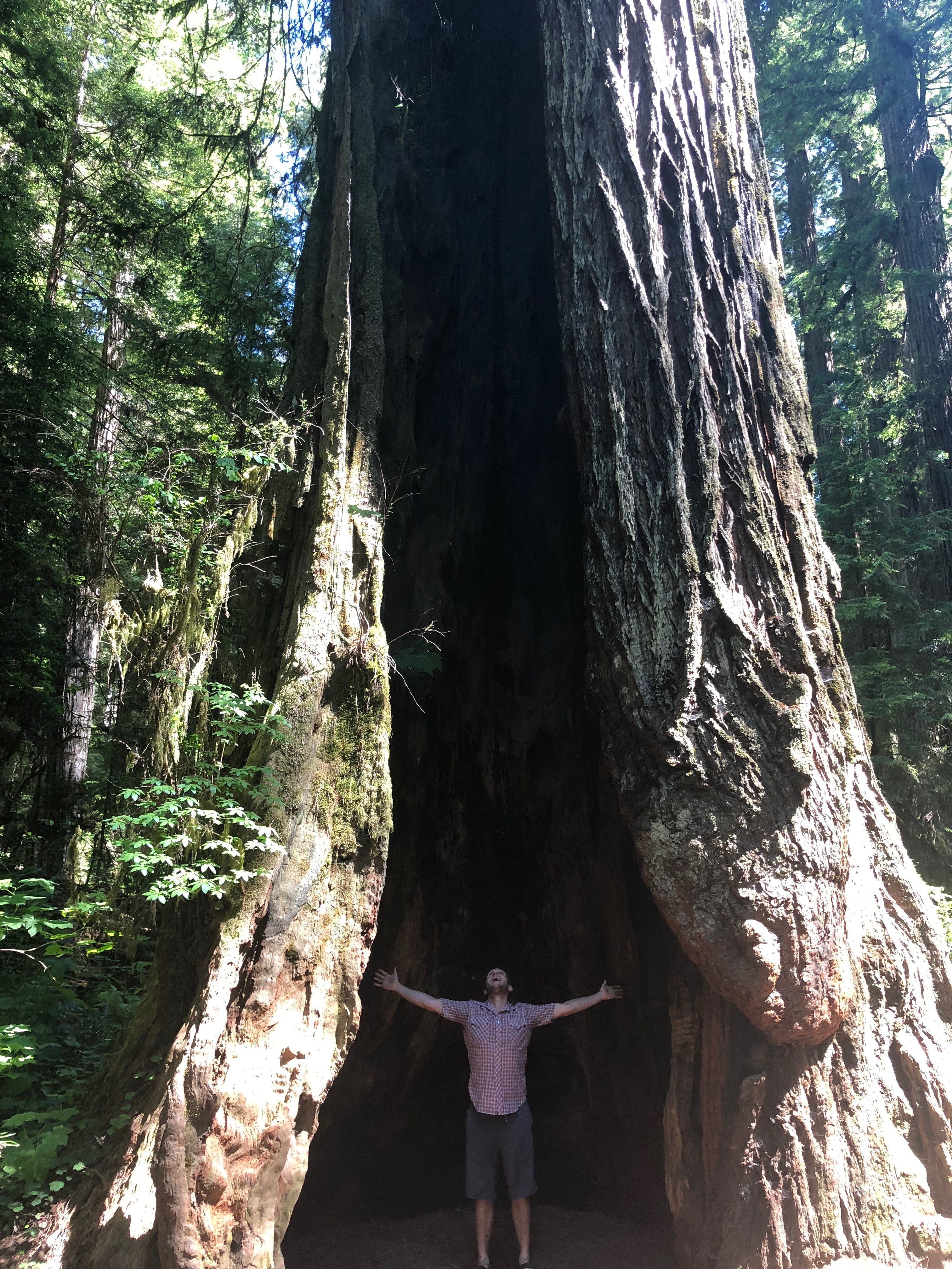 justin in redwood