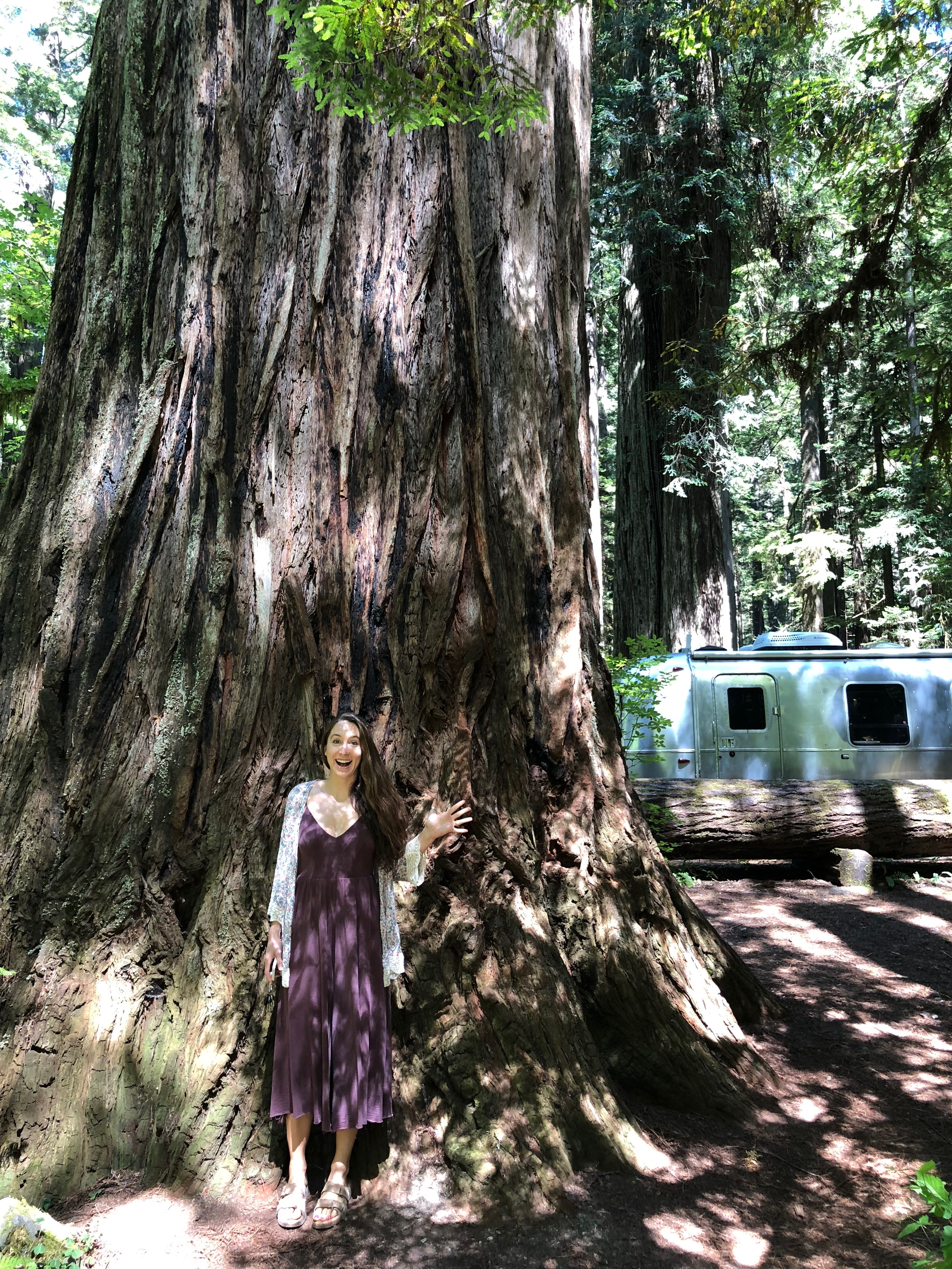 Ariele in front of redwood