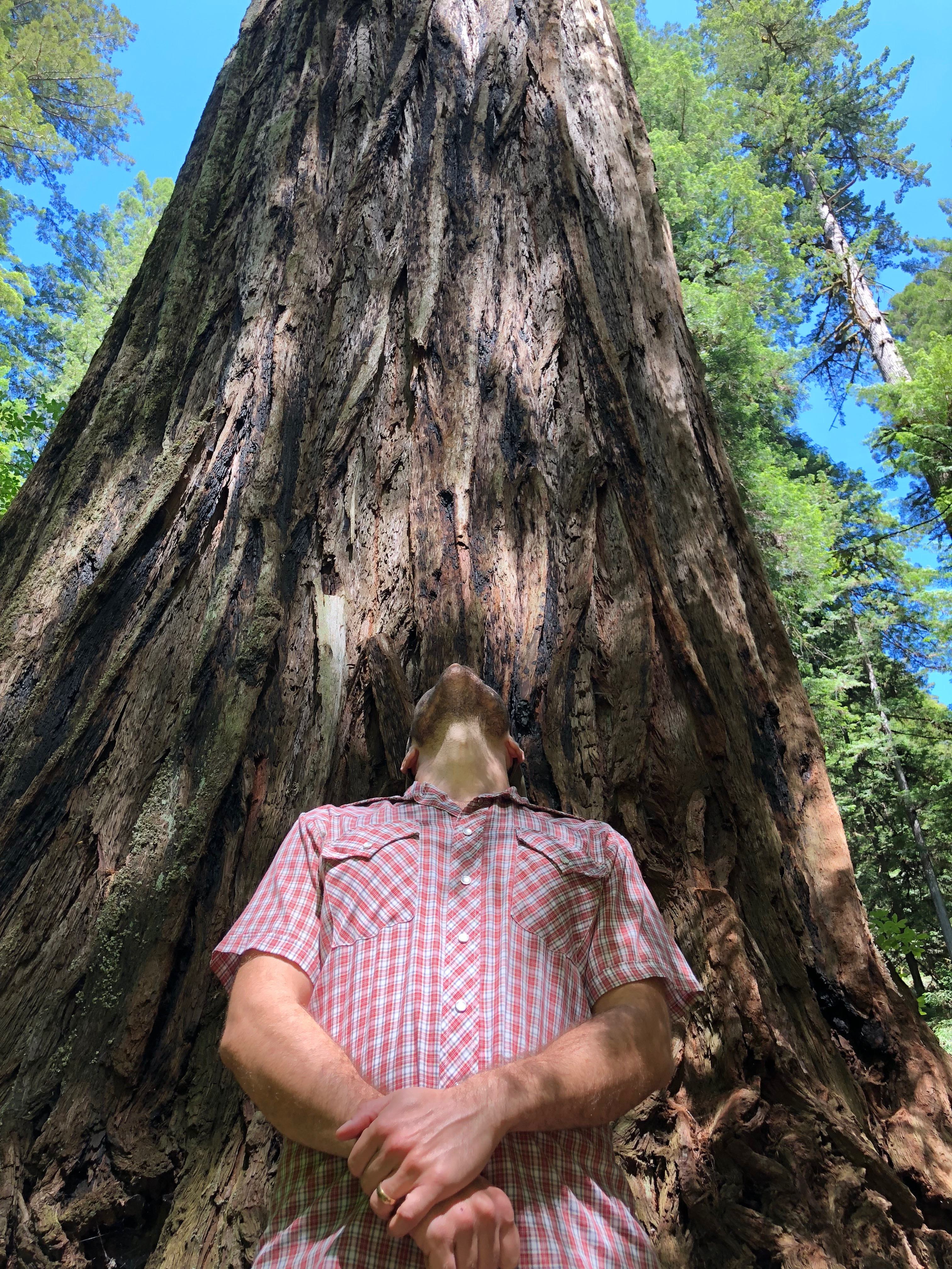 Justin in front of redwood